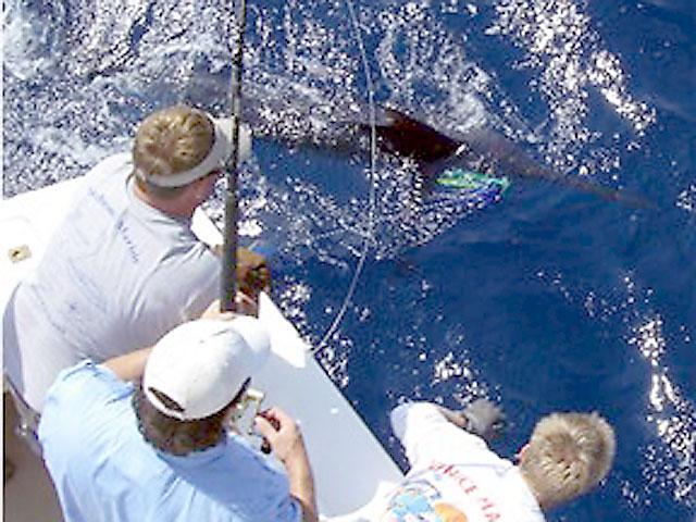 09.blue-marlin.brutus.2007