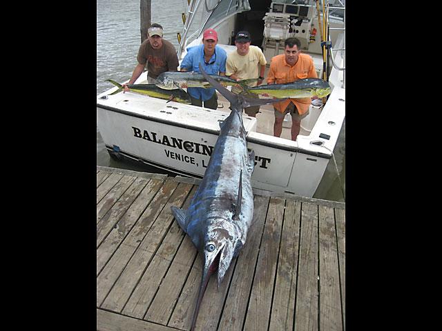 12.blue-marlin.brutus.2007