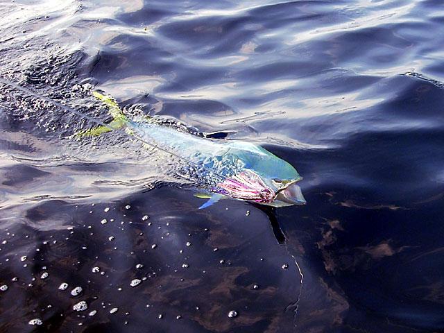 20.dolphin.18