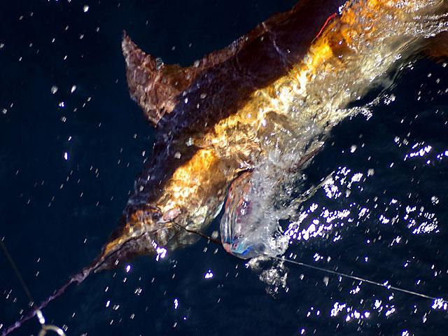 2008.Blue-Marlin.19.04