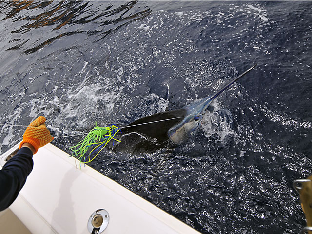 2008.Blue-Marlin.Brutus.16