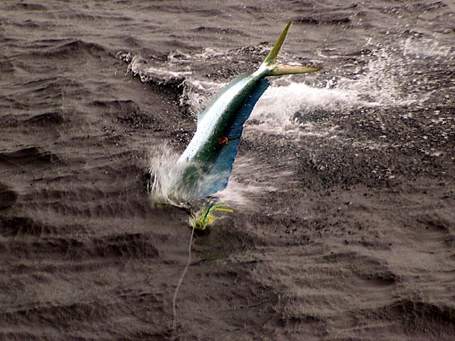 2008.Dolphin.Brutus.06
