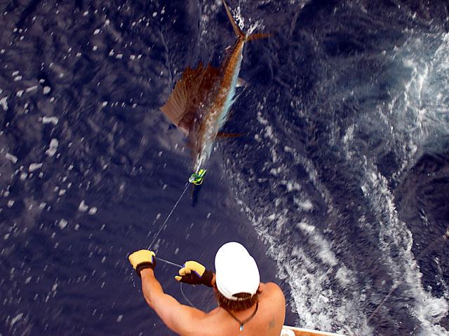 2008.Sailfish.Baby-Brutus.07