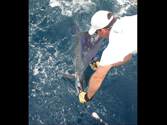 2008.Sailfish.Lena.12