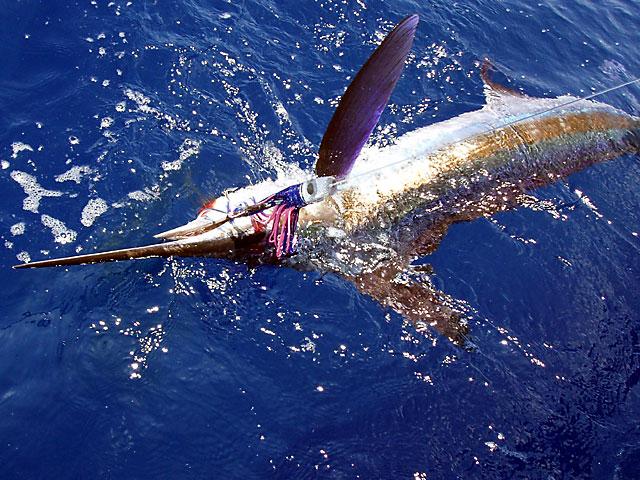 25.white-marlin.mars.2007