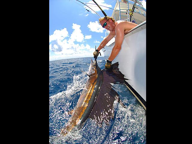 25_sailfish_lena_2009
