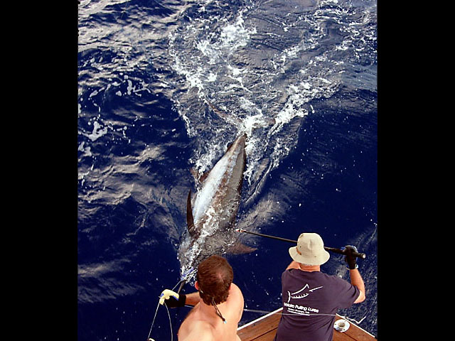 27.blue marlin.ursa.2007