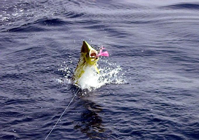 28.dolphin.lena.2007