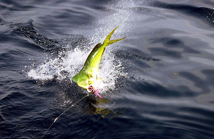 29.dolphin.lena.2007