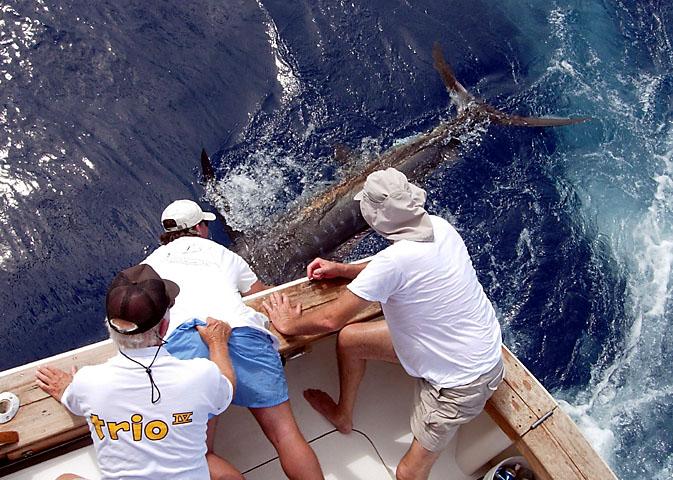 35.blue marlin.medusa.2007