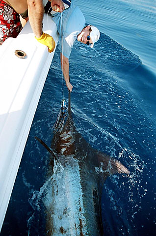 Recapture Blue Marlin May 20 2005