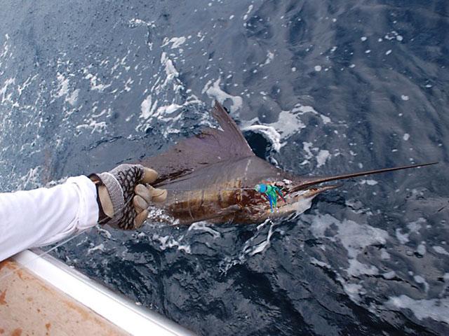 18_2010_Costa-Rican-Sail_Le