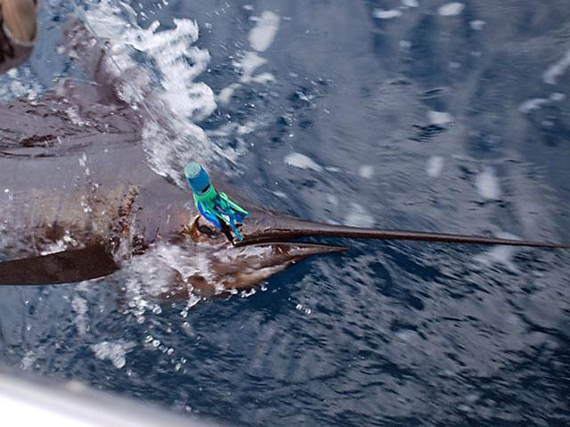 19_2010_Costa-Rican-Sail_Le